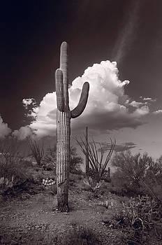 Steve Gadomski - Saguaro Sunset Arizona BW