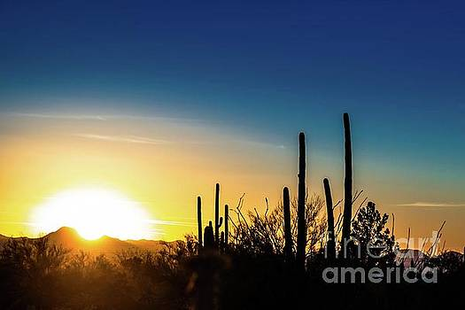 Saguaro Sunset by Jim DeLillo