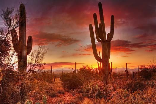Susan Rissi Tregoning - Saguaro Sunset