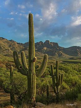 Saguaro by Tim Fitzharris