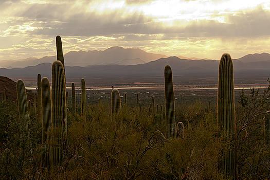 Susan Rissi Tregoning - Saguaro Valley View