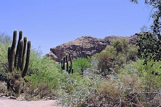 Saguaros by Grace Dillon