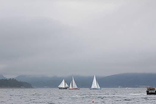 Sailboat races by Martha Boyle