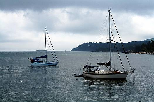 Linda Sannuti - Sailboats in Bar Harbor