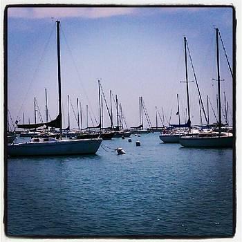 Sailboats On Lake Michigan, Chicago by Tammy Winand