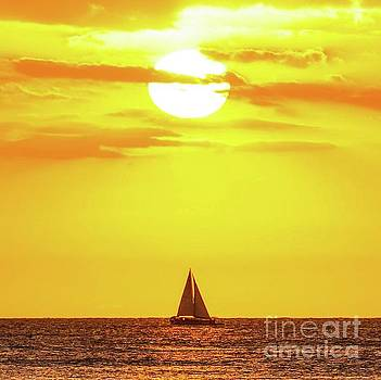 Sailing in Hawaiian Sunshine by D Davila