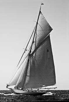 Pedro Cardona Llambias - Sailrace in open sea - vintage vessel of one mast in Port Mahon water - pedro cardona