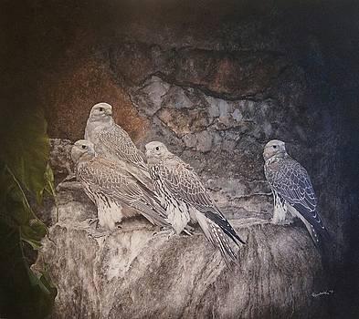 Saker Falcons on a rock by Erna Goudbeek