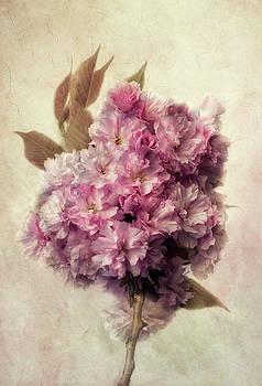 Sakura by Claudia Moeckel