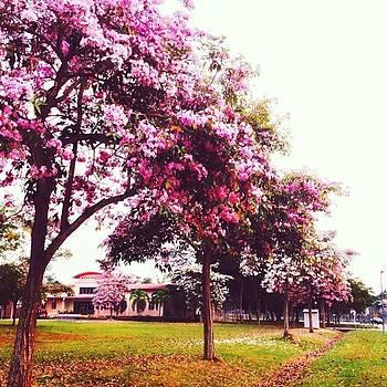 #sakura #flowers #flowersontheground by Kang Choon Wong