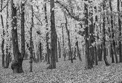 Sal Forest in Spring by Hitendra SINKAR