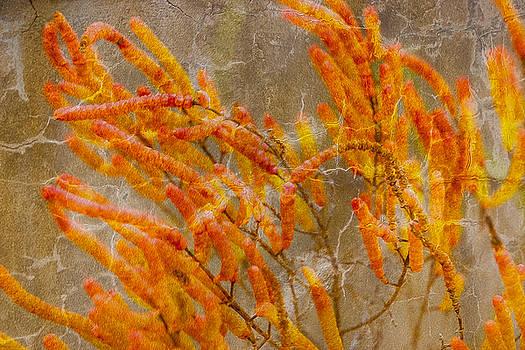 Salicornia by Linda Murdock