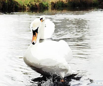 Salisbury River Swans by Marites Reales