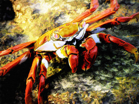 Sally Lightfoot Crab painting by Chris Hood