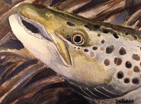 Salmon by Christine Winship