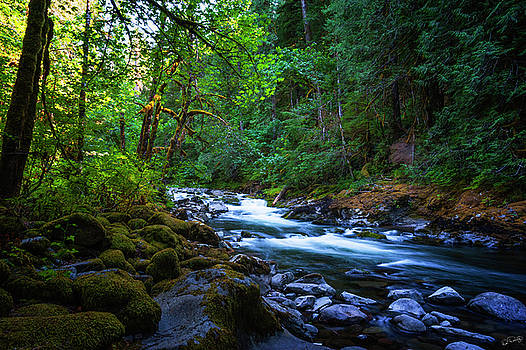 Salmon River in Mt. Hood National Forest by Dee Browning