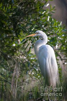 Dale Powell - Salt Marsh Heron