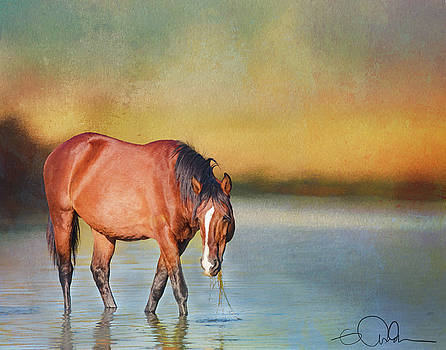 Salt River Wild Horse by Gloria Anderson