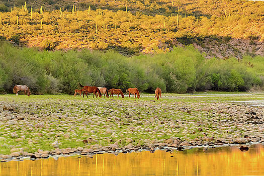 Salt River Wild Horses by Emily Bristor