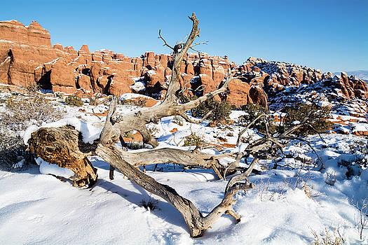 Robert VanDerWal - Salt Valley In Winter