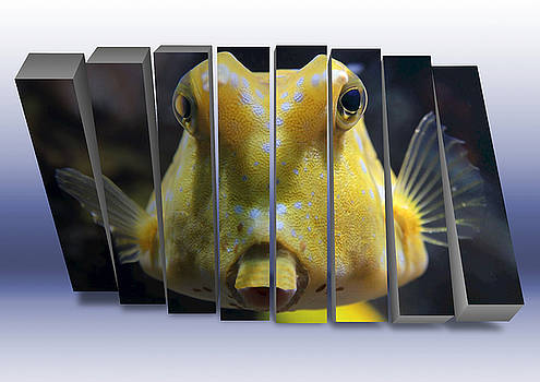 Saltwater Cowfish by Marvin Blaine