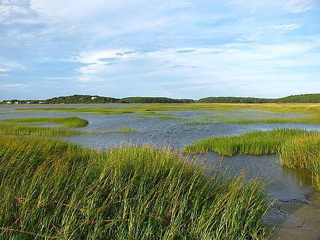 Tammy Bullard - Saltwater Marsh