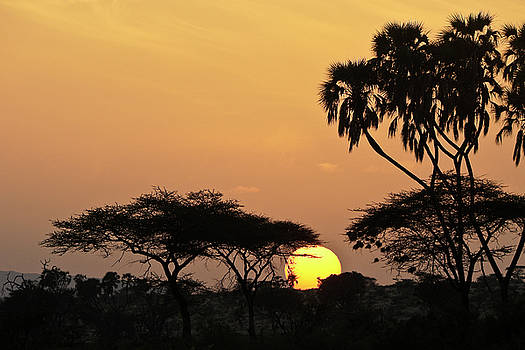Michele Burgess - Samburu Sunrise