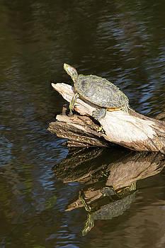 Same Log-Different Turtle by William Tasker