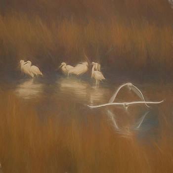 San Blas Wildlife by Deb Henman
