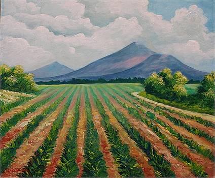 San Cristobal by Jean Pierre Bergoeing