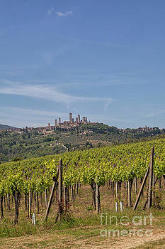 San Gigmignano and its vineyards  by Patricia Hofmeester