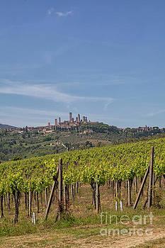 Patricia Hofmeester - San Gigmignano and its vineyards