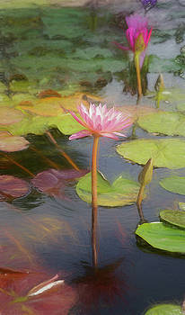 San Juan Capistrano Water Lilies by Michael Hope