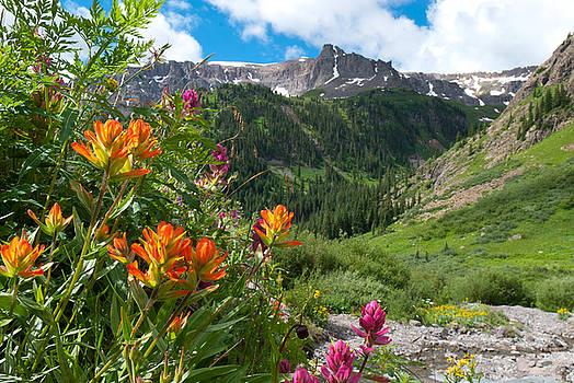 San Juans Indian Paintbrush Landscape by Cascade Colors