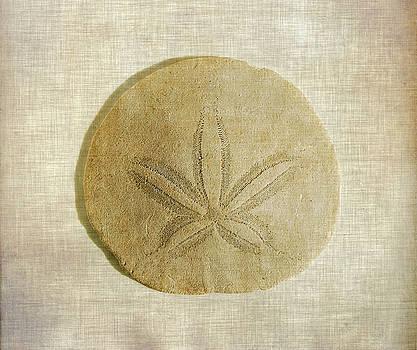 Sand Dollar by Cindi Ressler