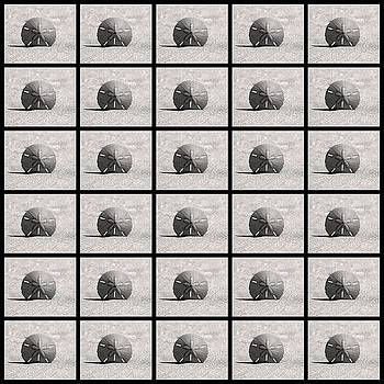 Rosanne Jordan - Sand Dollars Collage black