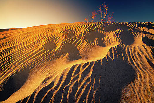 Sand dune flux lines by William Freebilly photography