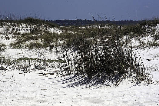 Sand Dune by Kelly E Schultz