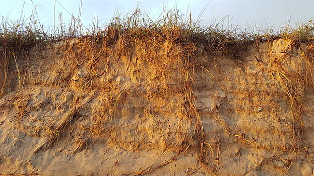Sand Dunes by Ami Brown