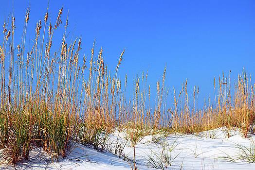 Sand Dunes and Sea Oats by James Kirkikis