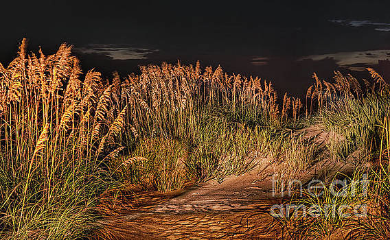 Dan Carmichael - Sand Dunes at Night on the Outer Banks