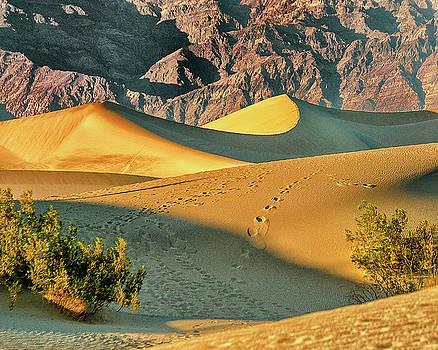 Sand Dunes - Death Valley by Winnie Chrzanowski