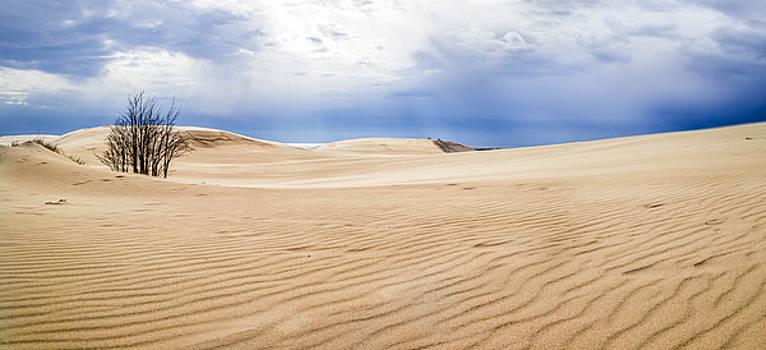 Sand Dunes Panorama by Ashleigh Mowers