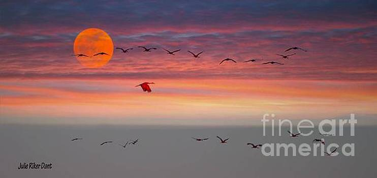 Julie Dant - Sand Hill Cranes at Sunset/Moonrise