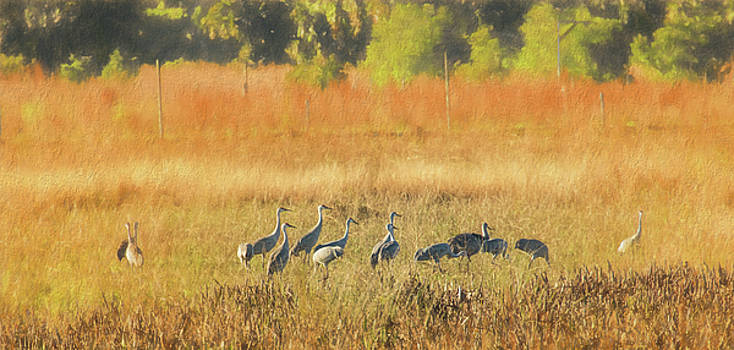 Sandhill Cranes, Indiantown by Richard Goldman