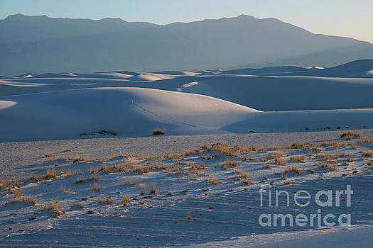 Bob Phillips - Sand Hills and Desert Plants at Sunset