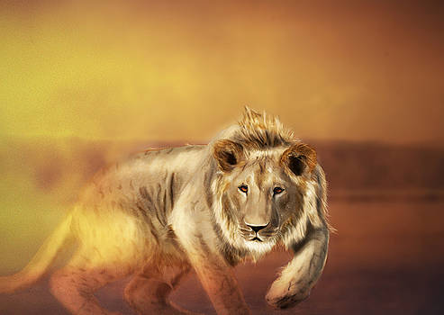 Sand Lion by Jarek Kossman