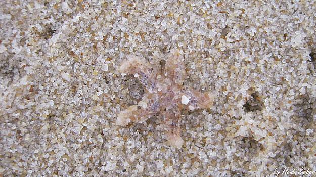 Heidi Sieber - Sand or Starfish?