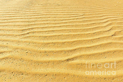 Tim Hester - Sand Ripple Texture