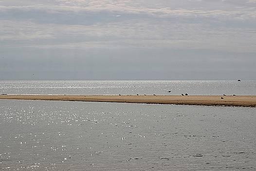 Sandbar by Linda Crockett